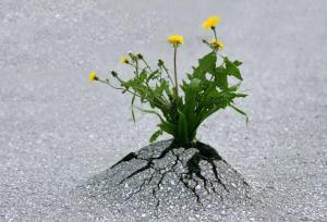 Persistence1